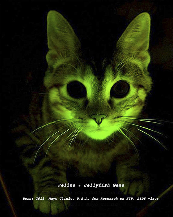 Genetically modified cat from The Infinity Engine - 2010